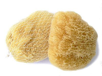 morská huba karibská